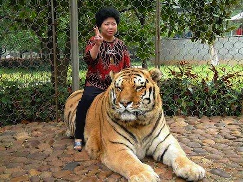 tigerpeace.jpg