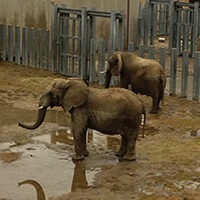 elephants_200